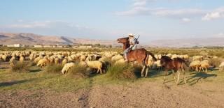 (Özel) Orta Asya'nın bozkırları değil, Erciyes Dağı'nın etekleri